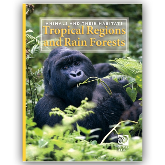 Tropical Regions and Rain Forests cover