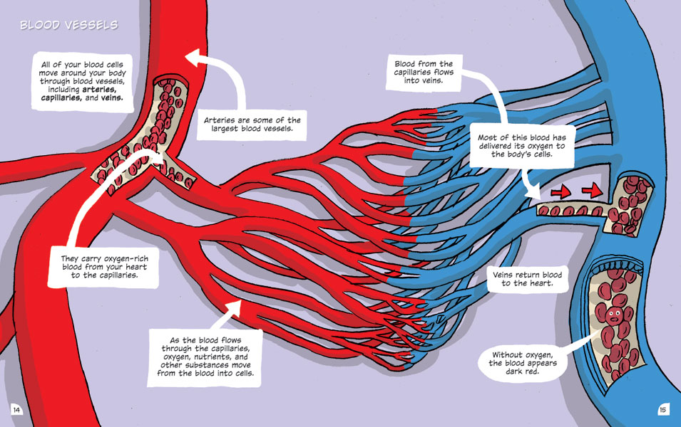 The Circulatory System World Book