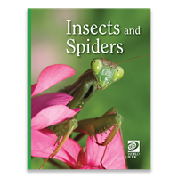 Insects and Spiders cover