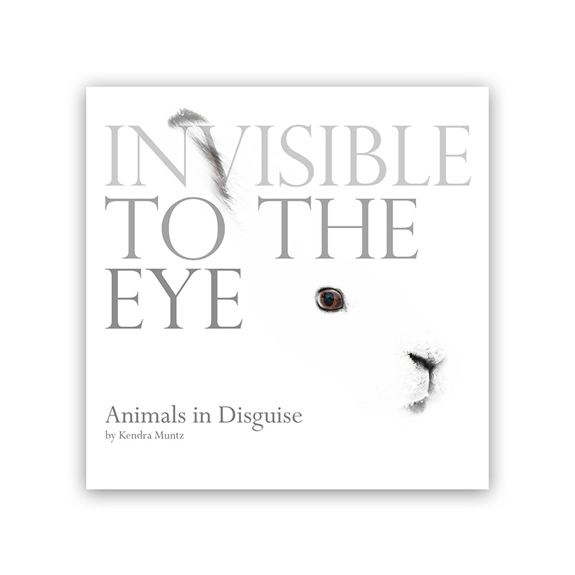 Invisible to the Eye Animals in Disguise cover