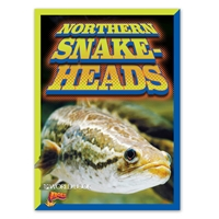BOLT Northern Snakeheads cover