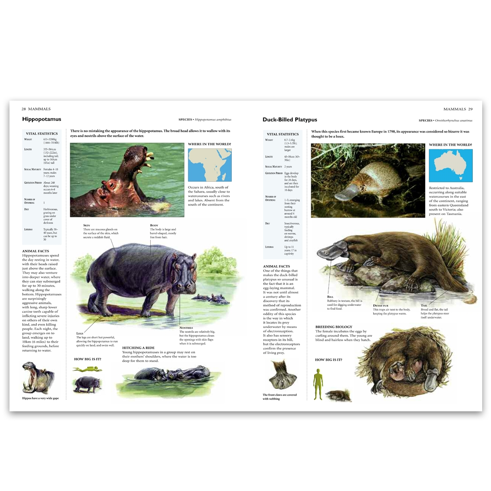 Animals and their Habitats | World Book