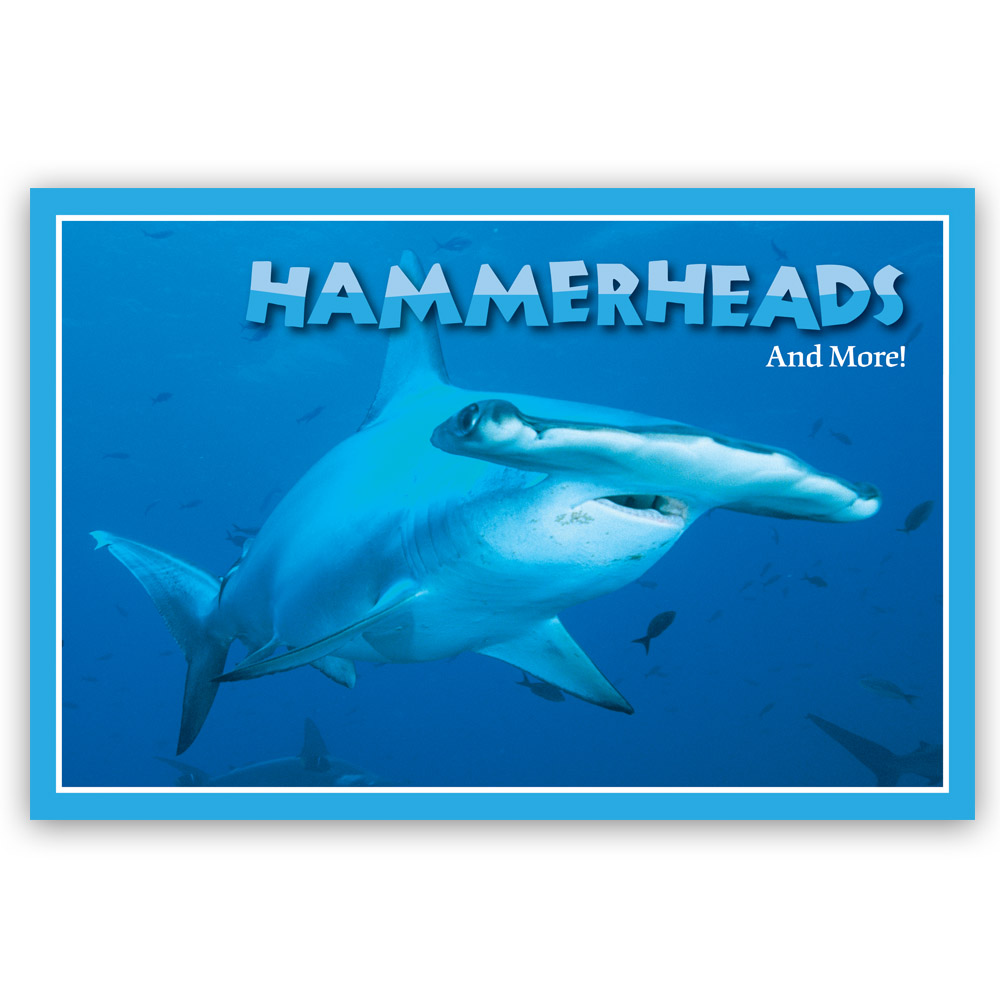 Hammerheads and More - 20605